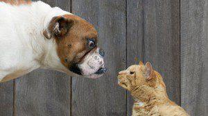 3 key differences between brand ambassadors vs. social influencers
