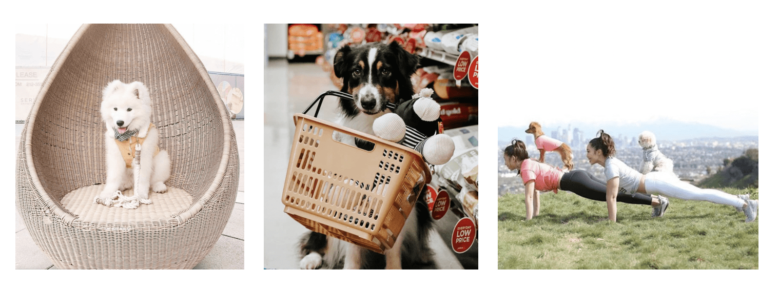 Pet Brand on Instagram, Petco