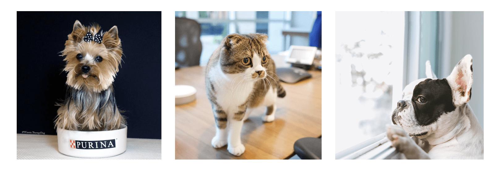 Pet Brand on Instagram, Purina